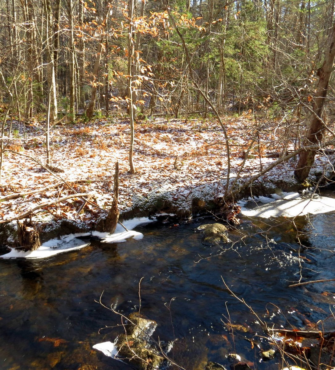 9. Snow Along Bailey Brook