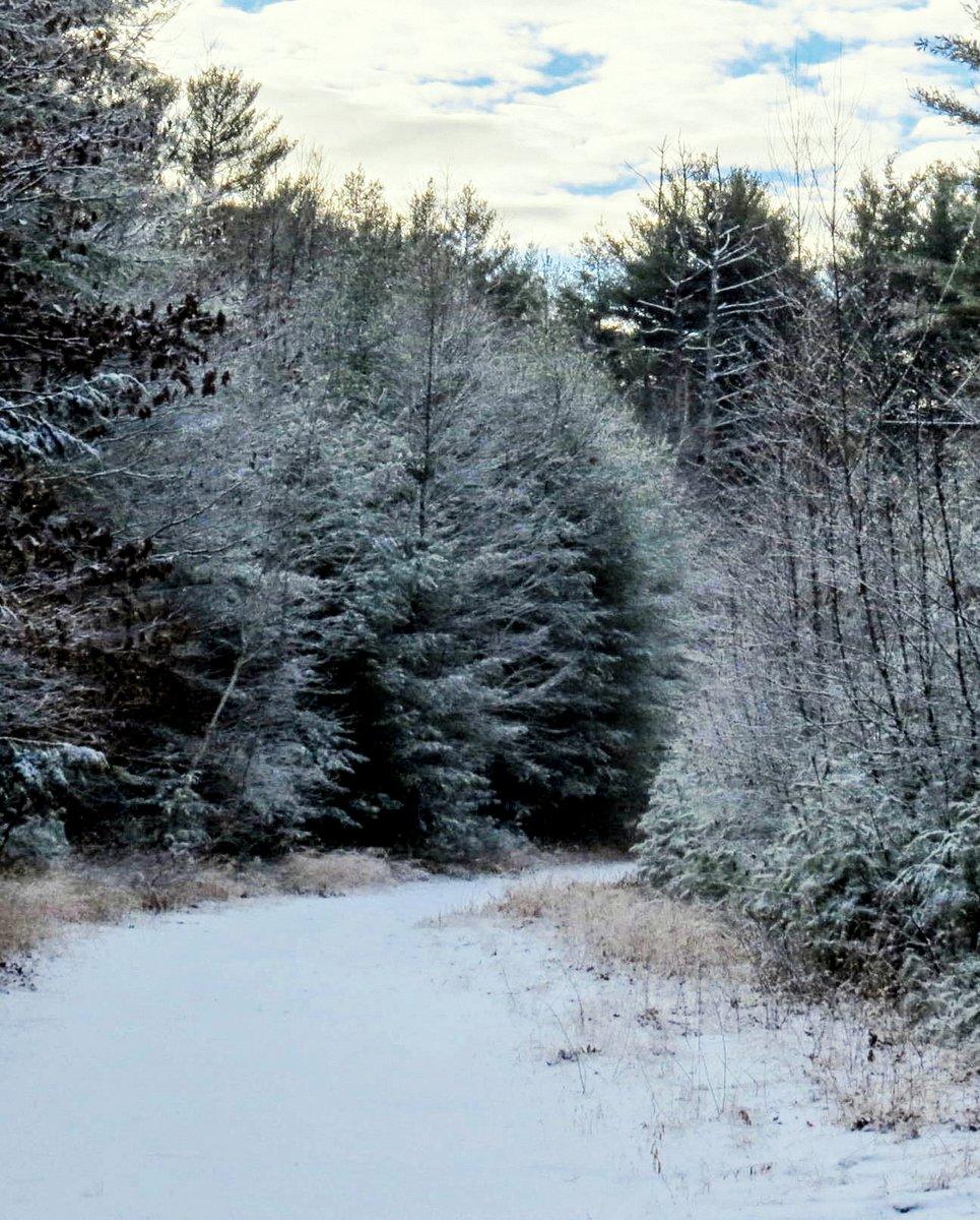 9. Snowy Scene