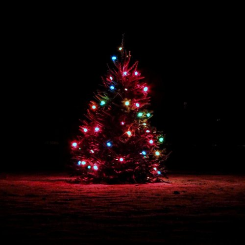 Christmas Tree 2-3