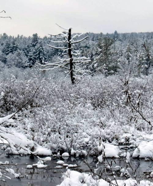 1. Snowy Heron Tree