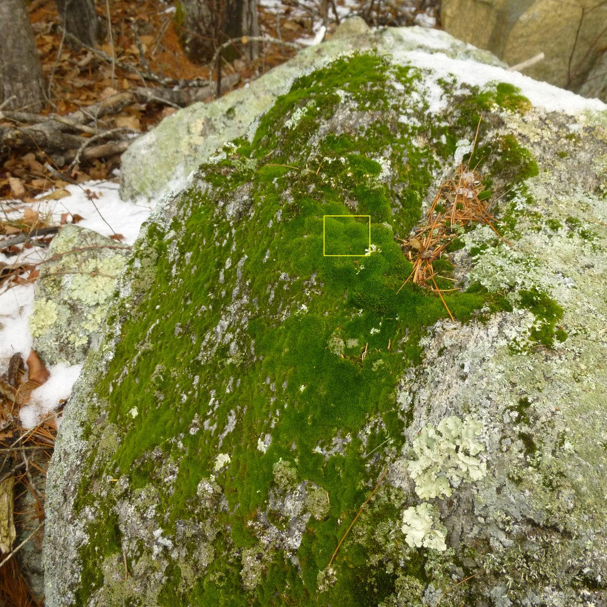 11. Moss Covered Boulder