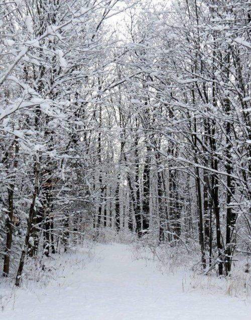 2. Snowy Trail