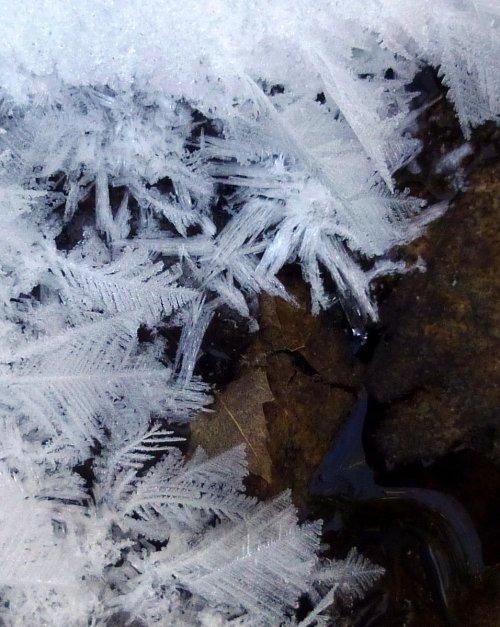 4. Hoar Frost