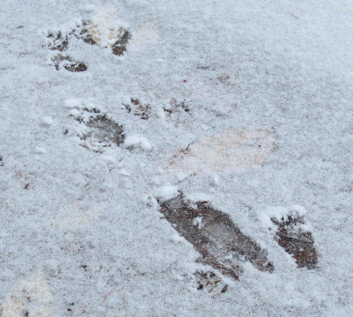 5. Squirrel Tracks