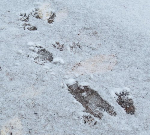 5. Squirrel Tracks