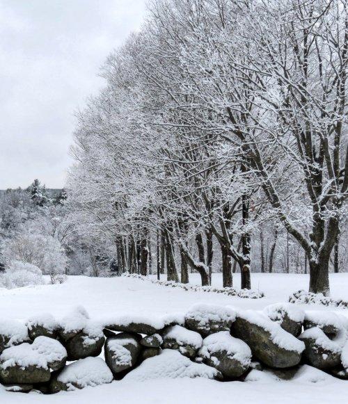 6. Snowy Field