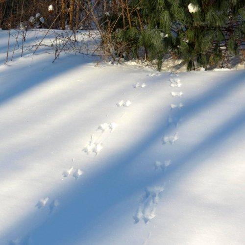 8. Footprints to Pine