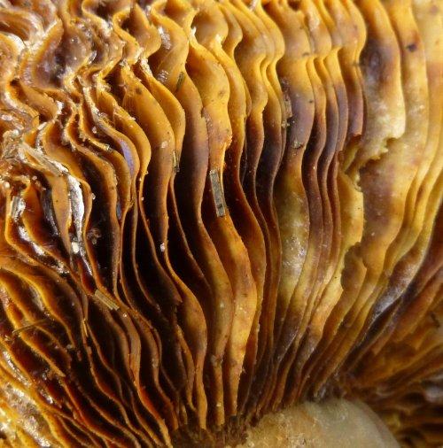 8. Frozen Mushroom Gills