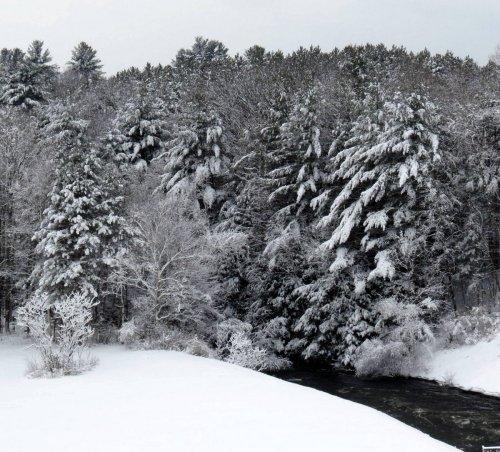 8. Snowy Ashuelot Surry