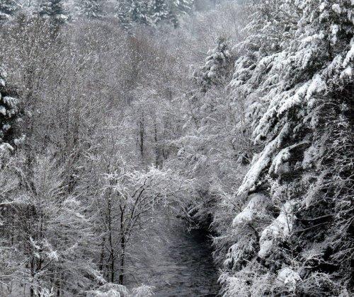 9. Snowy Ashuelot Surry 2