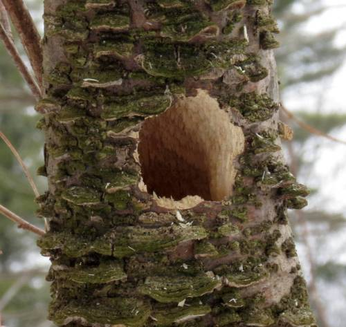 13. Woodpecker Hole