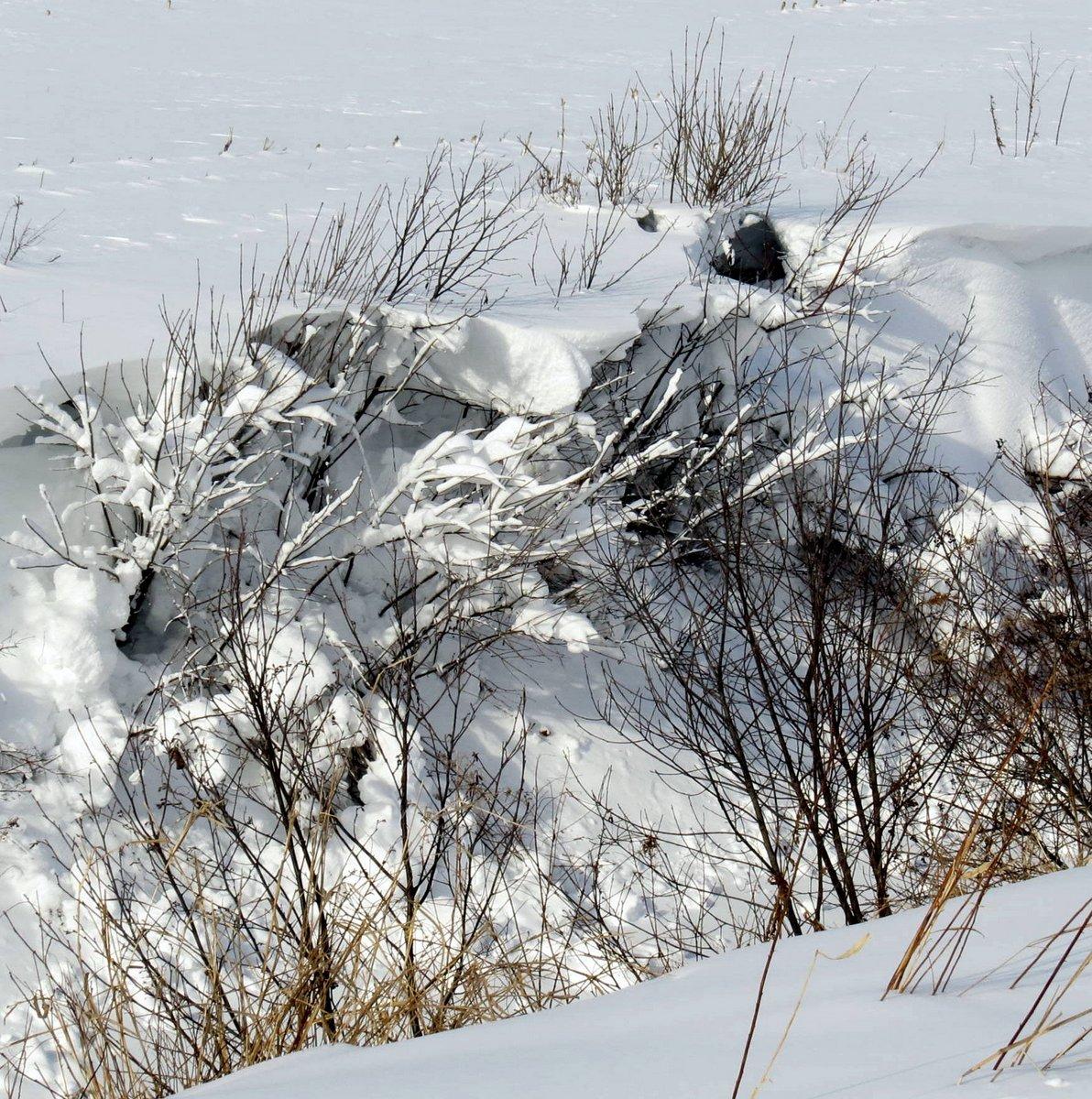 2. Snowy Bushes