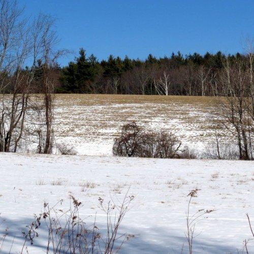 3. Hay Field
