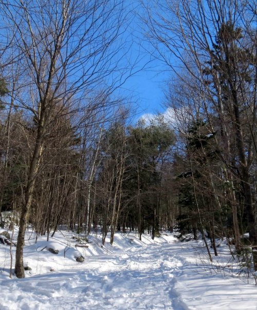 3. Pitcher Mountain Trail