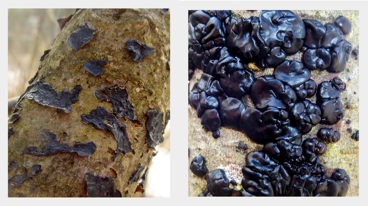 5. Black Jelly Fungus