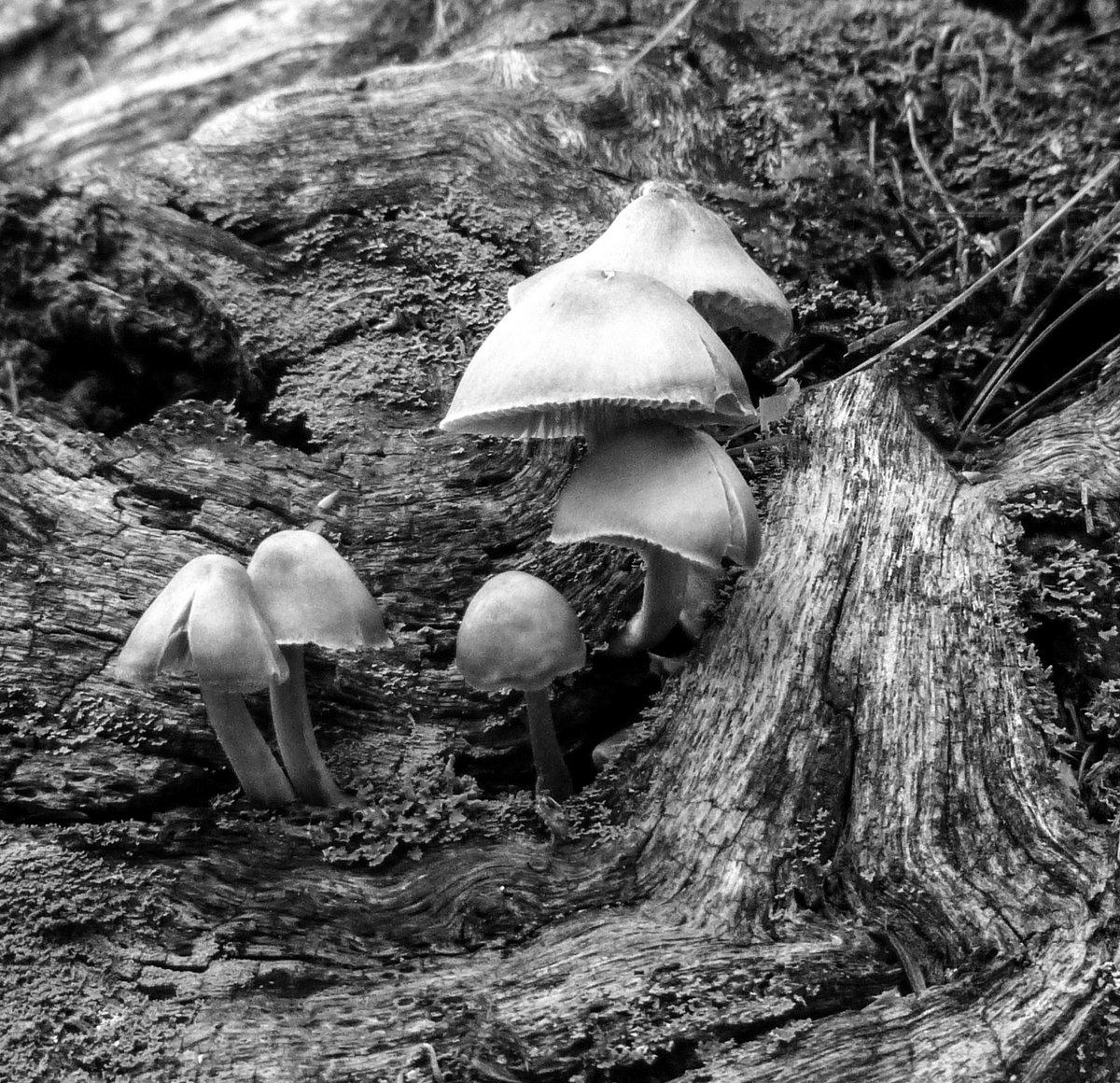 6. Mushrooms on a Log