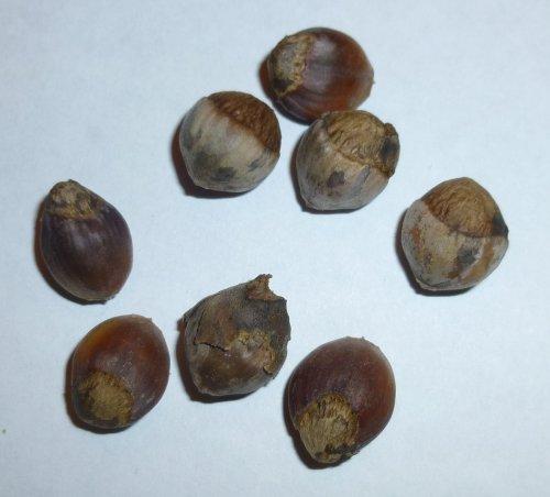 7. Hazelnuts
