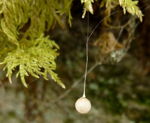 12. Egg Case Hanging from Moss