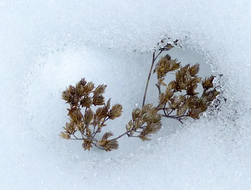 New Hampshire Snow