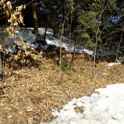2. Melting Snow
