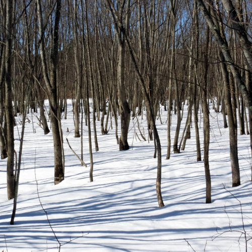 4. Winter Woods