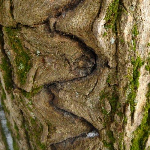 9. Zig Zag Tree Wound Closeup