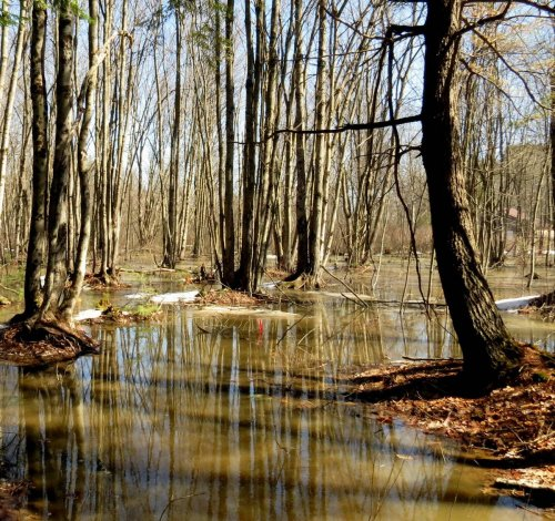 1. Flooded Forest