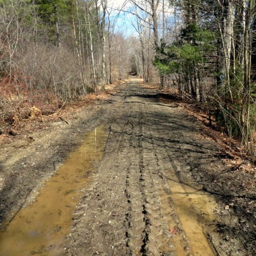 1. Muddy Logging Road