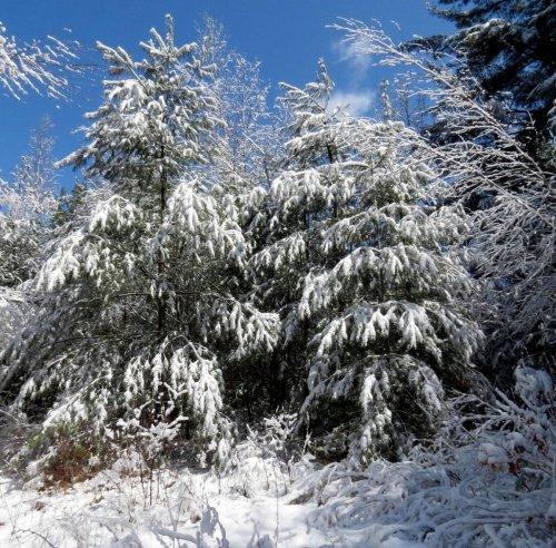1. Snowy April Scene