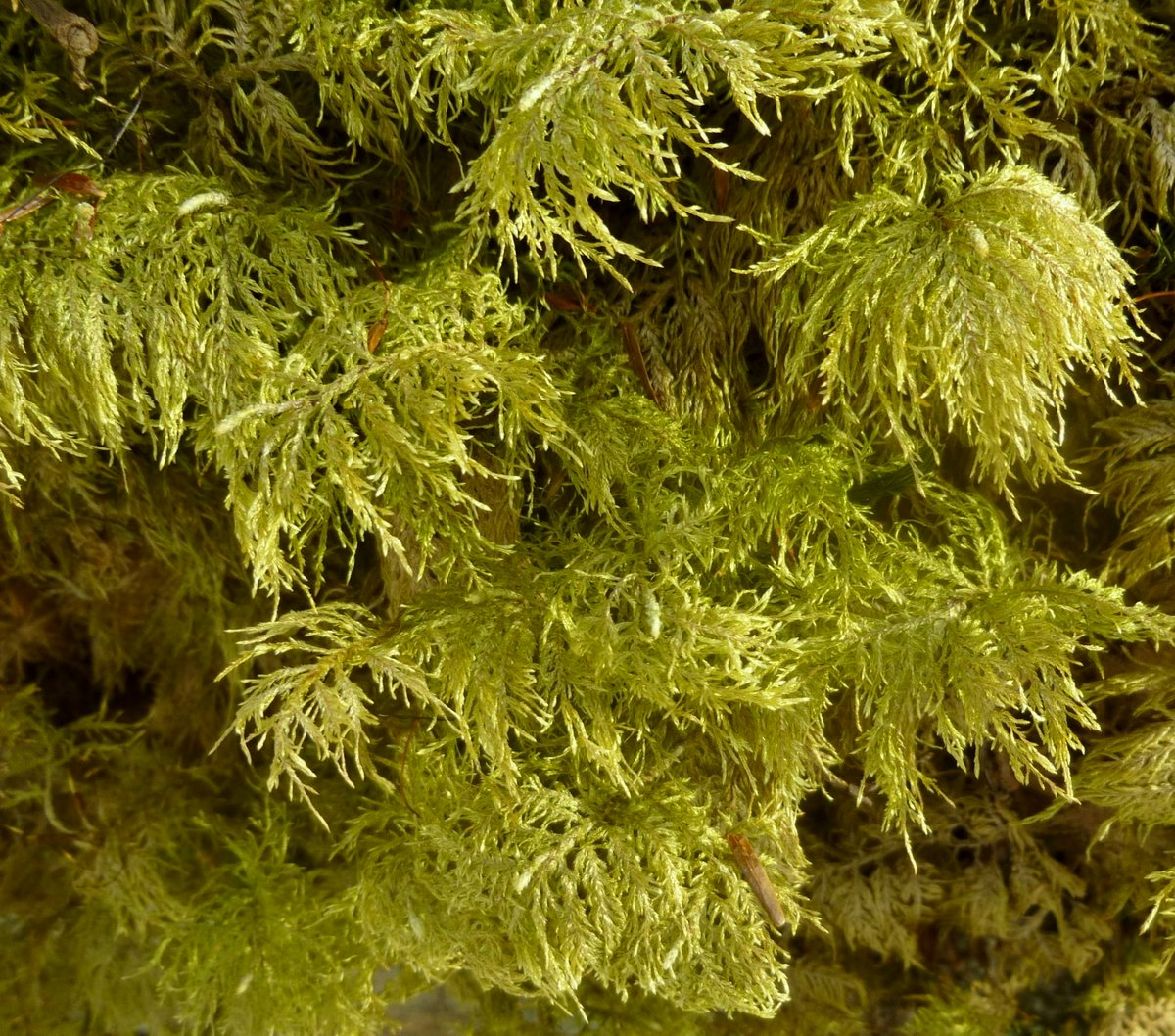 11. Stairstep Moss