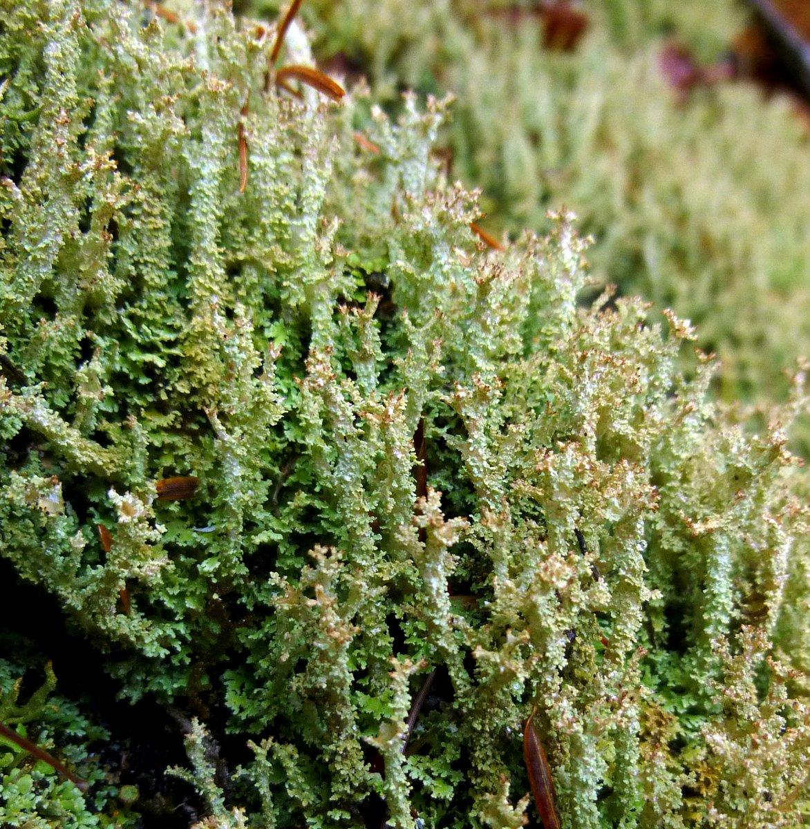 12. Rockfoam Lichen