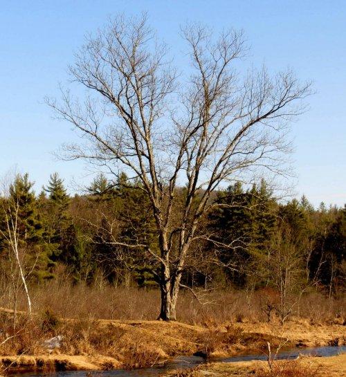 4. Lone Tree