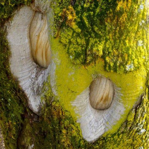 5. Candleflame Lichen aka Candelaria concolor