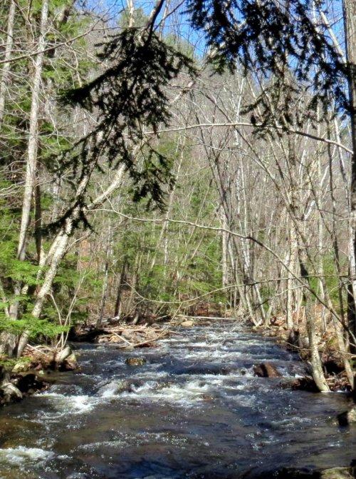 6. Beaver Brook