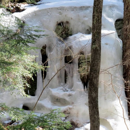 9. Ice in the Woods