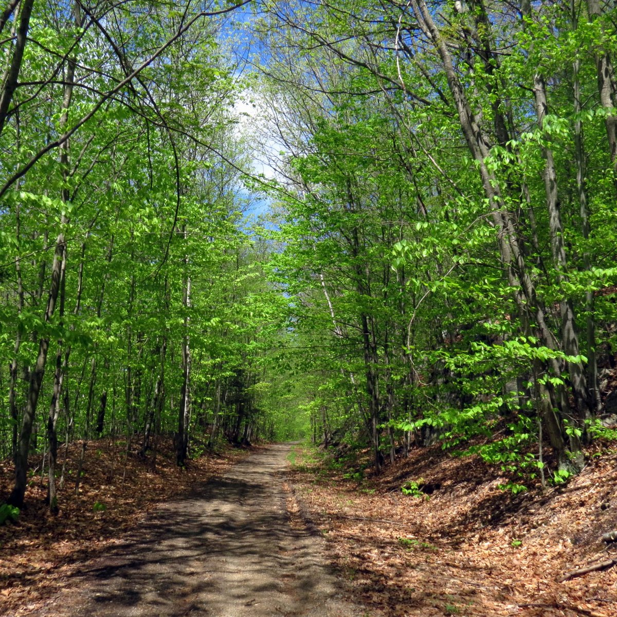 1. Trail
