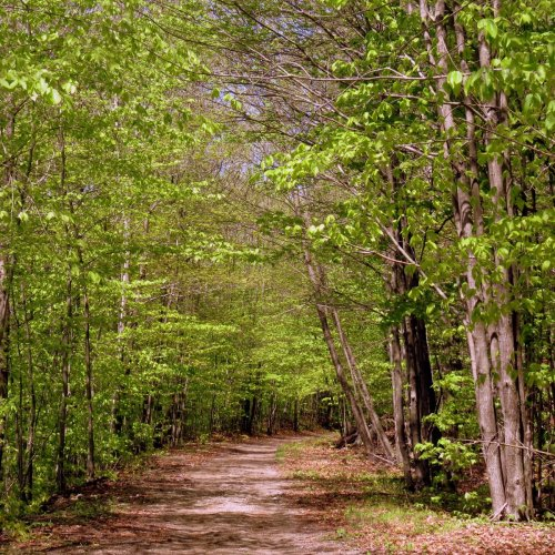11. Trail