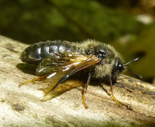 2. Bee