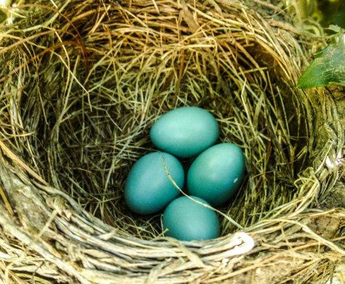 3. Robin's Eggs