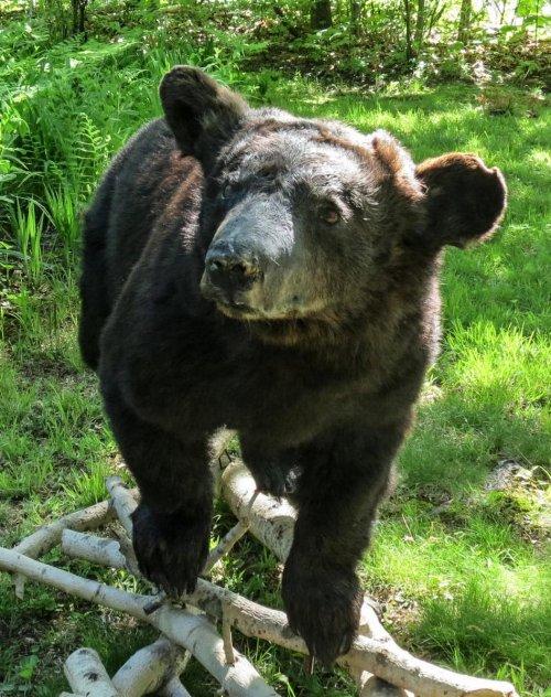 4. Stuffed Black Bear