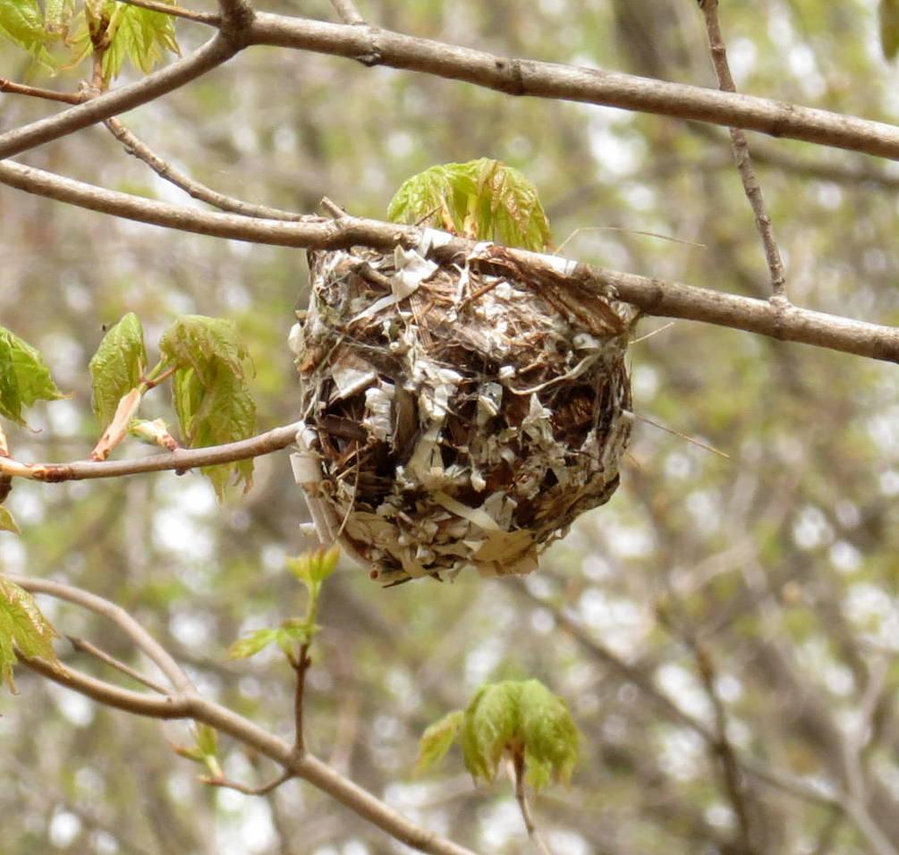 4. Unknown Nest
