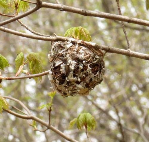 4. Unknown Nest