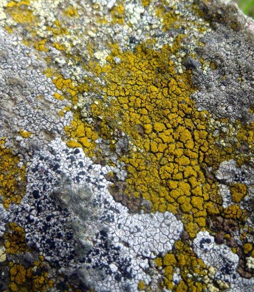 10. Lichens