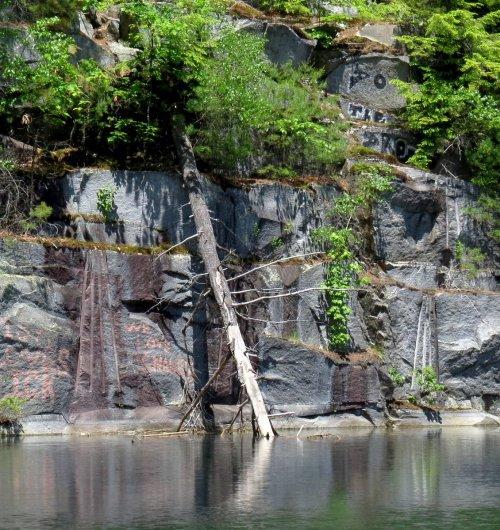 16. Fallen Tree