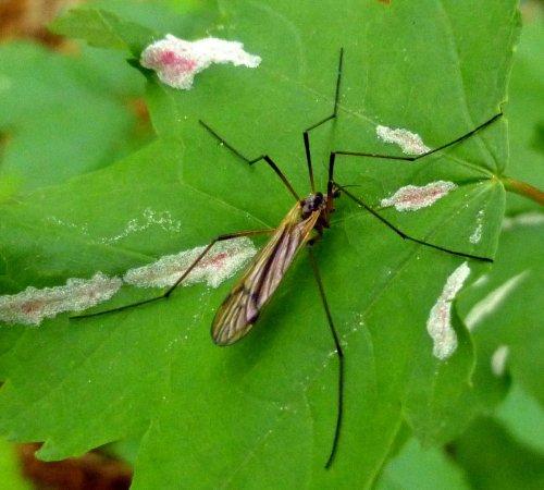 4. Bug on a Maple Leaf