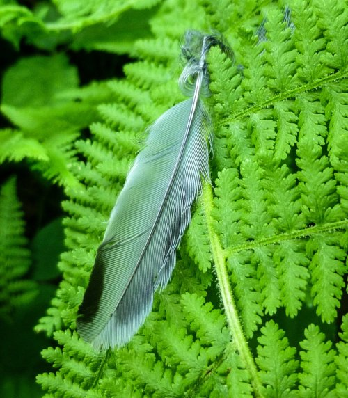 1. Feather on Fern