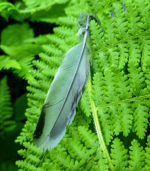 1. Feather on Fern