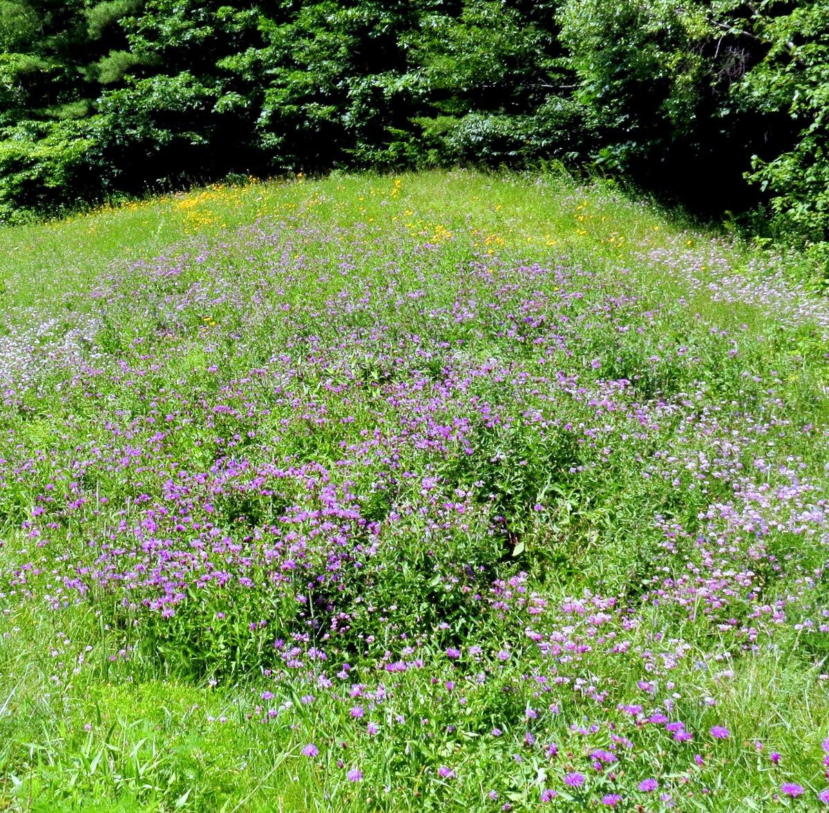 10. Roadside Meadow