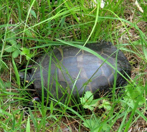 2. Turtle in the Grass