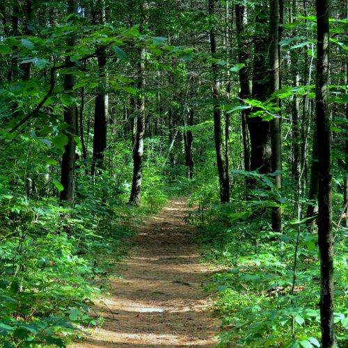 3. Woodland Path
